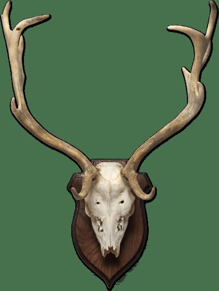חדר הפלאות -DeerHead