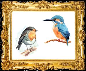 ציפורים חדר הפלאות